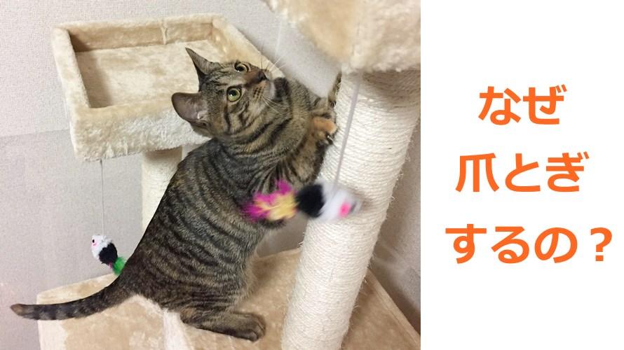 猫の爪とぎ意味・理由知ってる?困った爪とぎ解決のヒントがあるよ!