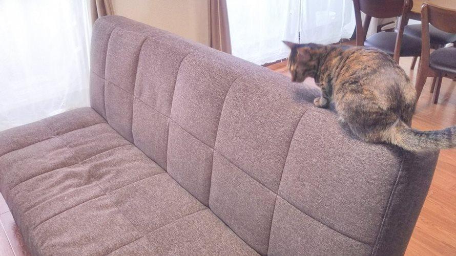 ソファでの猫の爪とぎ防止対策5つ!ソファカバーで保護がおすすめ