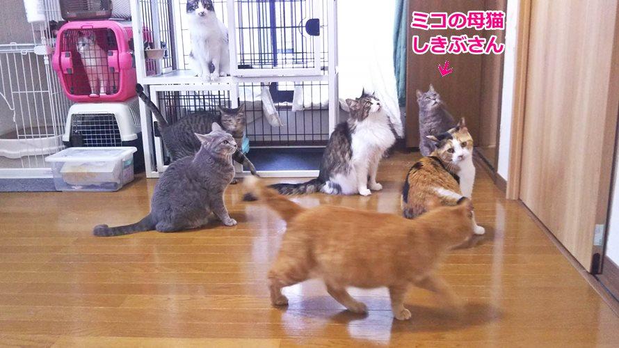 保護猫カフェビアンカ・ナイツ
