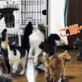 静岡の保護猫カフェ「保護にゃんわんビアンカ・ナイツ」に行ってきた