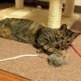 子猫はいつから半日くらい長時間の留守番ができる?注意点は?