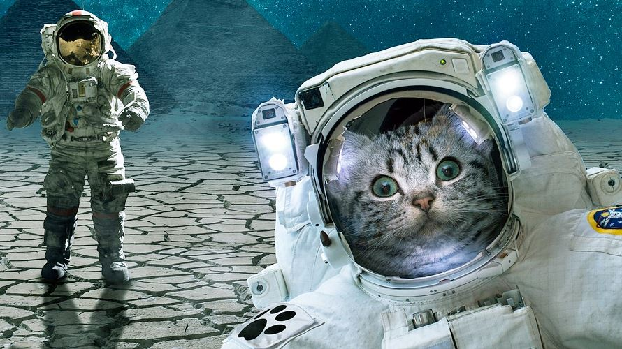 サンシャイン池崎さんの猫トイレ・キャットタワー・月と宇宙船はコレ!