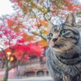 2019年9~10月猫写真で応募できるフォトコンテストまとめ!賞金も