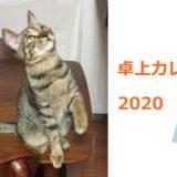 猫と卓上カレンダー