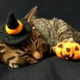 猫とハロウィン