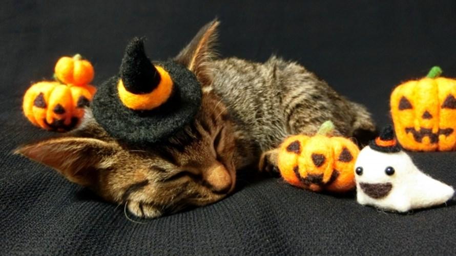 2019猫用ハロウィン仮装衣装♪かぶりもの帽子マント首輪まとめ