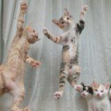 網戸に登る子猫