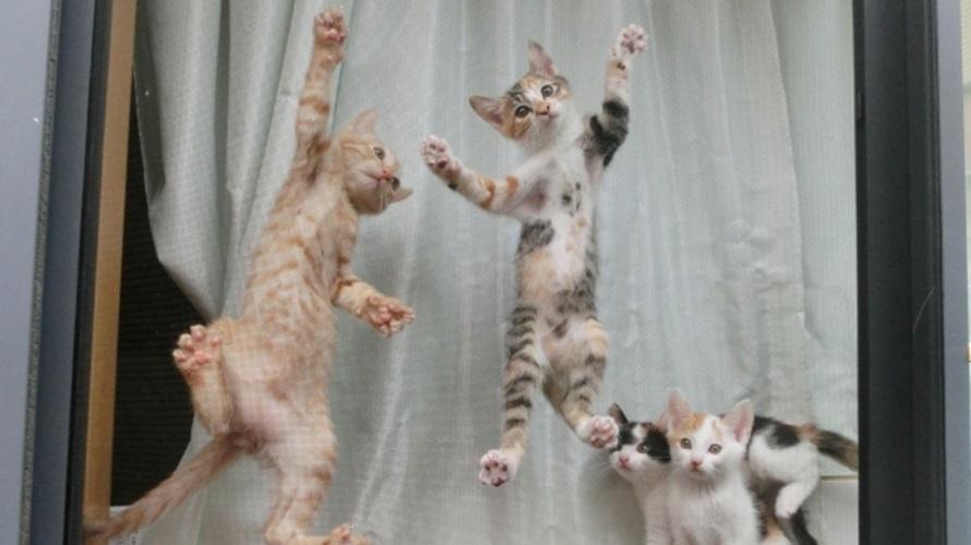 猫の網戸脱走防止対策7つ!脱走できない完璧対策はコレだ!