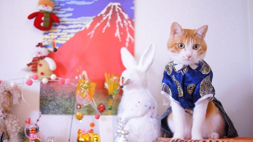 【猫用おせち2020】通販で買える!猫さんのお正月ごちそう特集