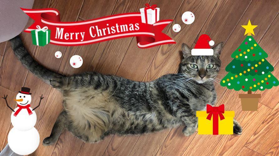 猫さんにクリスマスプレゼント!猫用おやつ・おもちゃギフト特集