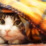 猫写真コンテスト2019年11-12月まとめ!受賞者プレゼントも