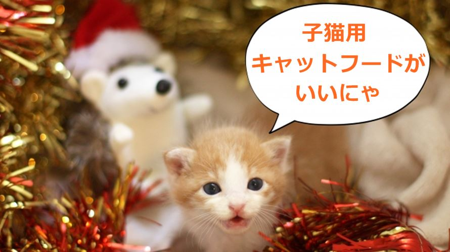 子猫クリスマス