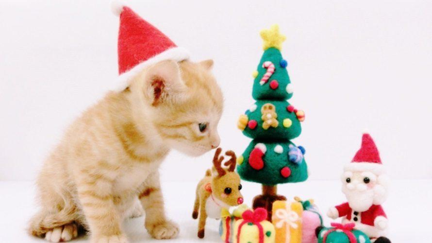 猫用クリスマスのコスプレ特集!かぶりもの・首輪・サンタ服まで